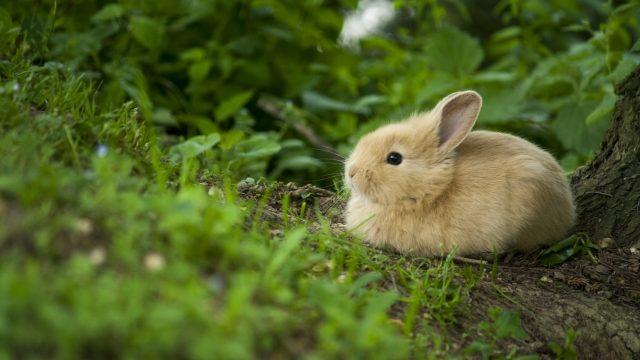 うさぎって何科の動物?歴史や日本での文化、ペットとして飼われるようになった背景も紹介