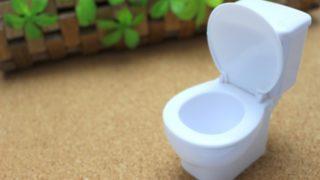 うさぎがトイレを覚えない!うさぎのトイレトレーニングはいつからがよいの?